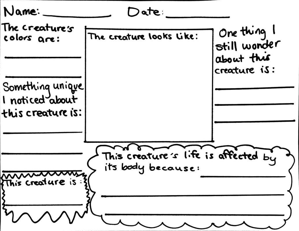 worksheet Observation Worksheet turtle observation worksheet ms wraith worksheet